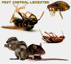 control the pests of your adobe in an easy method u2013 pest away