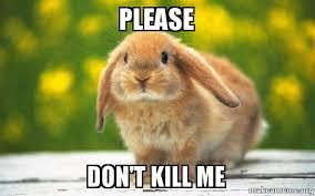 Please Kill Me Meme - please don t kill me please don t kill me rabbit make a meme