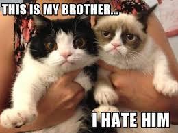 Meme Lol Com Wp Content - http funny pictures blog com wp content uploads 2013 01 lol grumpy