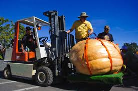 a great big pumpkin harvest festival held at thanksgiving point