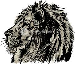 sketch of a big male african lion vector illustration royalty