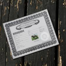 american pit bull terrier website adba purebred dog registration american pit bull terrier
