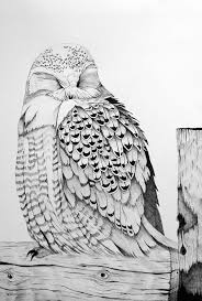 sleepy snowy owl on fence post drawing by leslie m browning