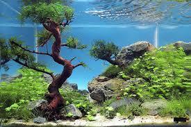 Aquascape Tree Aquascaping Interview Ionut Godea From Romania U2022 Aquascaping Love