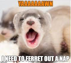 Sleepy Memes - ferret sleepy memes imgflip
