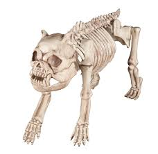 crazy bonez skeleton dog spiders of the web