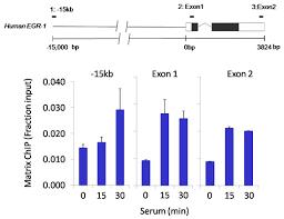 epigenetic antibodies thermo fisher scientific