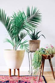Plants And Planters by Mid Century Indoor Planters