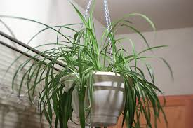 the 10 best plants for apartment dwellers u2013 orangewood park apartments