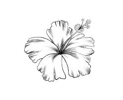 25 hibiscus drawing ideas hibiscus flower