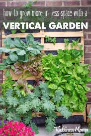 how to create a vertical garden to grow more in less space