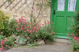 Summer Gardening - london cottage garden summer gardening blog