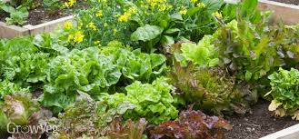 saving money in the garden by growing high value crops