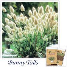 get cheap small bunny aliexpress alibaba