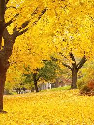 thanksgiving backdrop autumn trees printed photography backdrop 7747 autumn trees