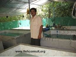 home stead ornamental fish rearing units in kerala state india