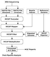 hicup pipeline for mapping and processing hi c data f1000research