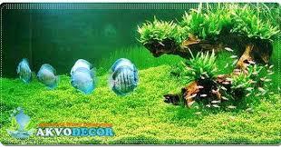 perawatan aquarium air laut aquarium air laut jual aquarium air