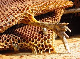 bees u0026 pesticides neonicotinoids berks and schuylkill