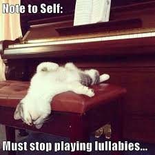 Piano Memes - lolcats piano lol at funny cat memes funny cat pictures with