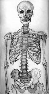 drawn skeleton pencil and in color drawn skeleton