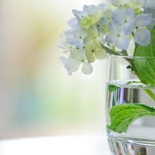 Hydrangea Flowers How To Dry And Preserve Hydrangea Flowers