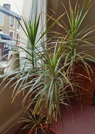 Tropical Potted Plants Outdoor - easy tropical houseplants hgtv