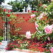 Largo Botanical Garden Pinellas County Florida Botanical Gardens