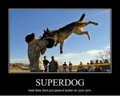 Peanut Butter Meme - super dog next time dont put peanut butter on your arm dogs meme