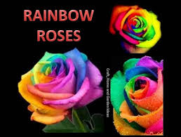 craft home and garden ideas rainbow roses
