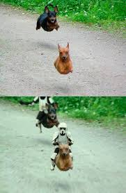 Wiener Dog Meme - behold the mighty flying wiener gif on imgur