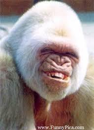 Funny Monkey Memes - the best funny monkey pictures ideas on funny monkeys funny monkey