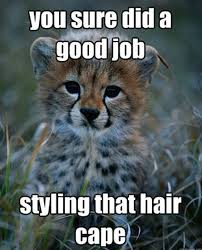 Baby Animal Memes - cutest baby cheetah jokes funny baby animals memes baby animals