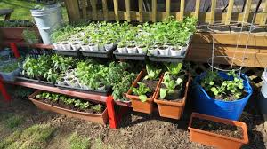 Vegetable Pot Garden by My First Container Garden Shelving U0026 Container Set Up Making