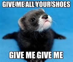 Ferret Meme - meme creator ferret meme generator at memecreator org