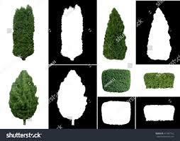 ornamental evergreens trees shrubs on white stock photo 411907162
