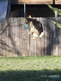 10 things only german shepherd dog owners understand u2013 iheartdogs com