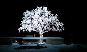 capture minnesota photo contest tree of light by jim ericson