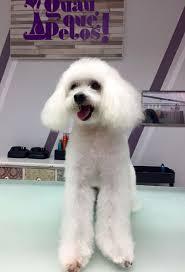 81 best clientes de nuestra peluquería canina en zaragoza images