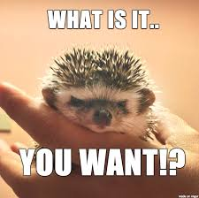 Hedgehog Meme - pissed off hedgehog meme on imgur