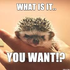 Pissed Off Meme - pissed off hedgehog meme on imgur