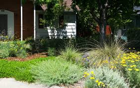 native american edible plants replace your lawn with ca natives eve u0027s garden design native