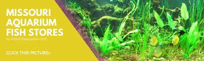 list of missouri tropical fish stores missouri aquarium fish