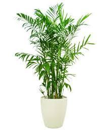 top house plants top indoor plants photogiraffe me