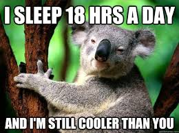 Koala Meme - i sleep 18 hrs a day and i m still cooler than you koala quickmeme