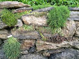 Garden State Rocks by Succulent And Moss Planted Rock Wall Garden At Wave Hill In