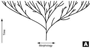 darwin s tree of uprooted creation myth or miracle