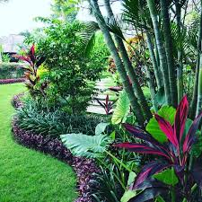 543 best tropical gardening images on pinterest tropical plants
