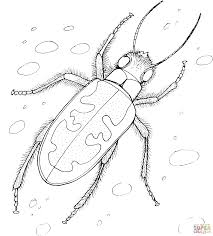 tiger beetle coloring page free printable coloring pages