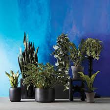 Houseplants by Grow Gorgeous Houseplants In Any Kind Of Light Martha Stewart